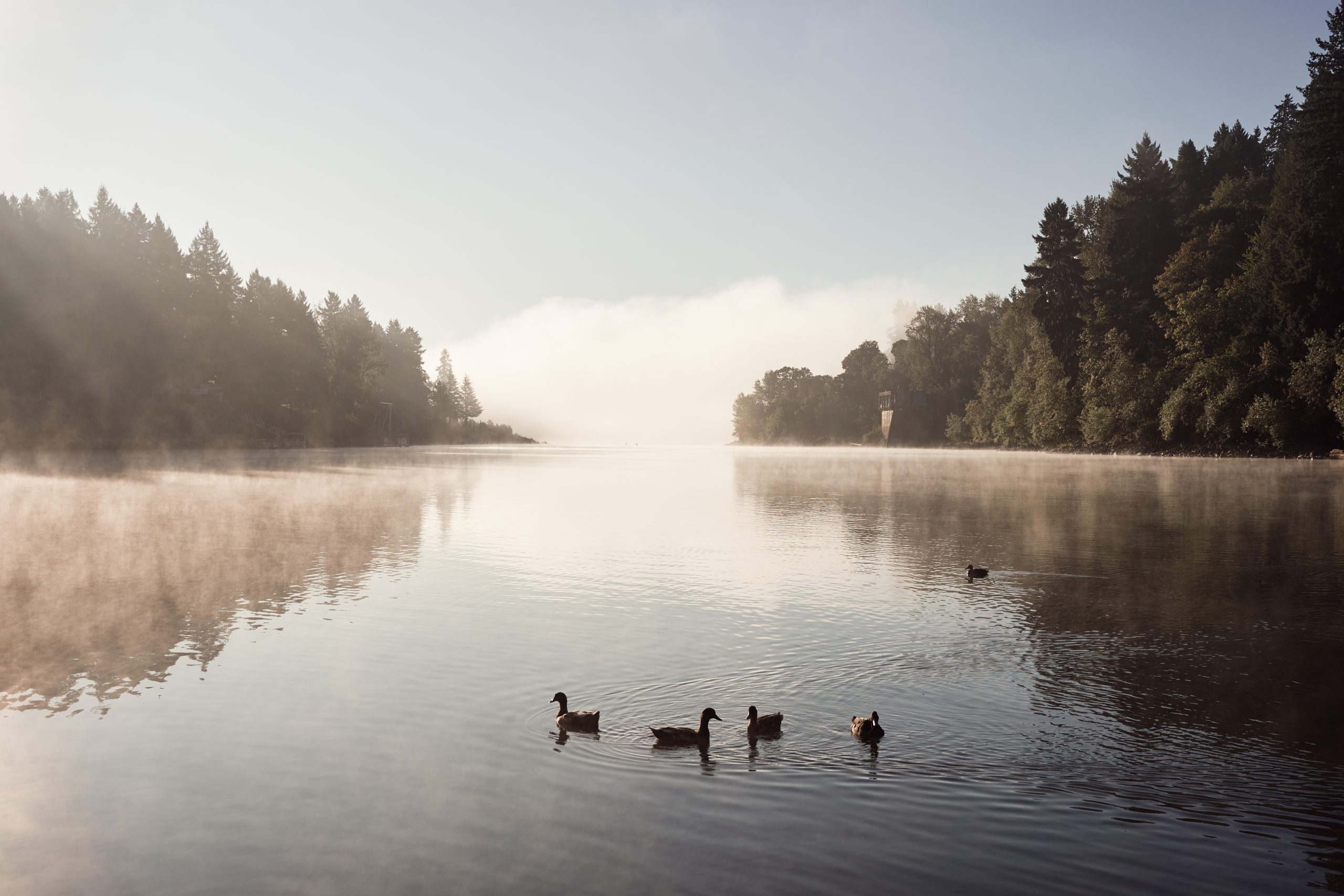 view of lake oswego oregon with some ducks swimming around